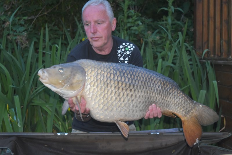 John Scoble with his strangely coloured 31-08 Common from Osprey Lodge