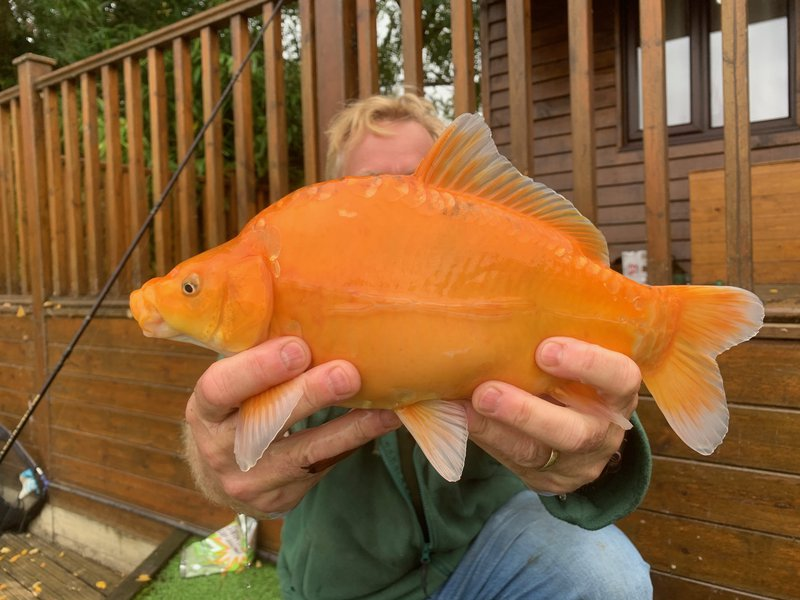 Nick Tye's amazing 'Goldfish like' Mirror Carp of about 1lb